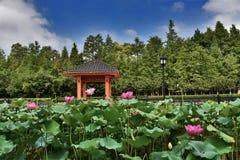 jardim verde no verão Imagem de Stock