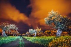 Jardim verde-oliva na obscuridade imagem de stock royalty free