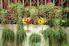Jardim vertical Foto de Stock Royalty Free