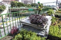 Jardim vertical Fotos de Stock Royalty Free