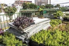 Jardim vertical Imagem de Stock Royalty Free