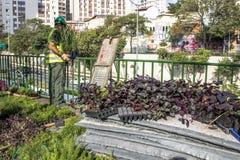 Jardim vertical Fotografia de Stock Royalty Free