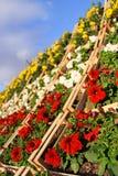 Jardim vertical Imagem de Stock