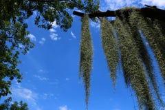 Jardim vertical pelo musgo espanhol com o céu Imagem de Stock