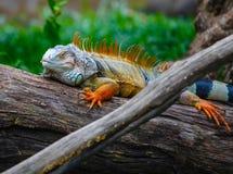 Jardim zoológico aberto de Khao Kheow Imagens de Stock