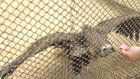 Jardim zoológico de alimentação do abutre do pássaro filme
