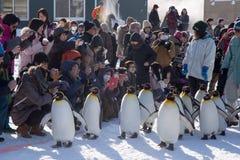 Jardim zoológico de Asahiyama, Asahikawa, Hokkaido, Japão fotos de stock