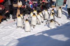 Jardim zoológico de Asahiyama, Asahikawa, Hokkaido, Japão imagem de stock royalty free