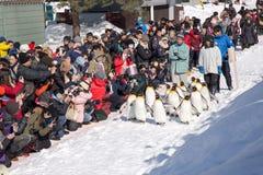 Jardim zoológico de Asahiyama, Asahikawa, Hokkaido, Japão fotos de stock royalty free
