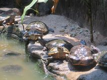 Jardim zoológico de Ragunan, Jakarta Imagens de Stock