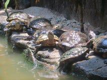 Jardim zoológico de Ragunan, Jakarta Fotografia de Stock