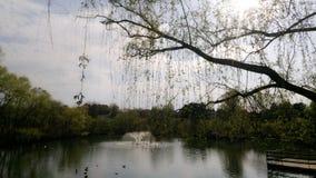 Jardim zoológico de Reston Fotografia de Stock