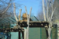 Jardim zoológico de Schonbrunn Fotografia de Stock Royalty Free