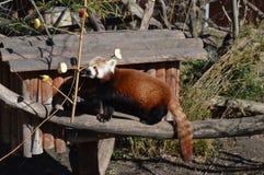 Jardim zoológico de Schonbrunn Fotos de Stock Royalty Free