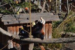 Jardim zoológico de Schonbrunn Foto de Stock Royalty Free