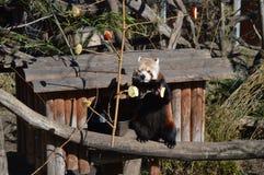 Jardim zoológico de Schonbrunn Imagem de Stock Royalty Free