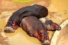 jardim zoológico de shenzhen, guangdong, porcelana Fotos de Stock Royalty Free