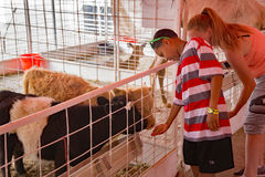 Jardim zoológico de trocas de carícias de Hedrick's foto de stock