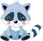 Jardim zoológico do divertimento. Raccoon Imagens de Stock