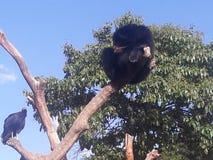 jardim zoológico do urso fotografia de stock royalty free