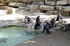 Jardim zoológico dos pinguins imagens de stock