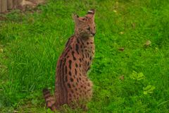 Jardim zoológico em Opole foto de stock