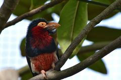 Jardim zoológico exótico de Londres do pássaro Imagens de Stock Royalty Free