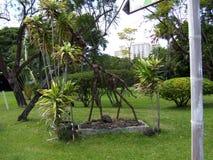 Jardim zoológico Havaí da arte do girafa imagem de stock royalty free