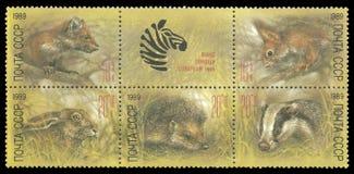 JARDIM ZOOLÓGICO, marta de pinho europeia, esquilo vermelho, lebre foto de stock