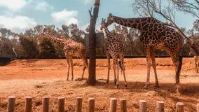 Jardim zoológico nacional de Rabat fotos de stock royalty free