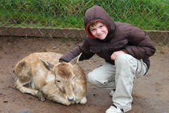 Jardim zoológico Petting Fotografia de Stock
