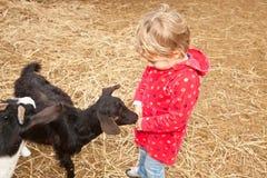 Jardim zoológico Petting Imagem de Stock