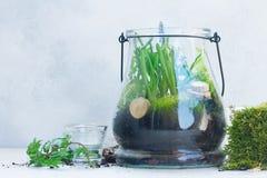 Jardin à l'intérieur de pot de maçon Photographie stock libre de droits