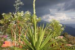 Jardin à une altitude de 2000 mètres. Colonia tovar, Venezuela. Image libre de droits