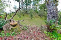 Jardin. Photographie stock