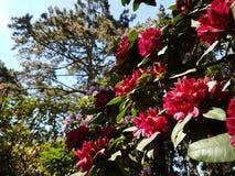 Jardin royalty-vrije stock foto