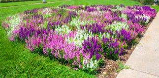 Jardin Images stock