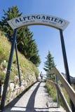 Jardin alpin de Schynige Platte Photo stock