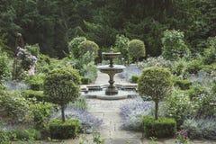 Jardin anglais formel avec des lits de fontaine et de lavande Photo stock