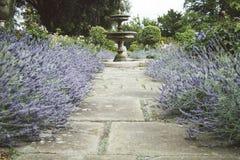 Jardin anglais formel avec des lits de fontaine et de lavande Photos stock