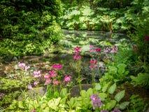 Jardin anglais typique - primevère photographie stock