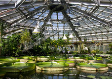 Jardin aquatique à la lumière du soleil avec différentes espèces de plante aquatique Nénuphars, Victoria Amazonica, jacinthe d'ea Image libre de droits