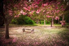 Jardin au printemps Photo stock