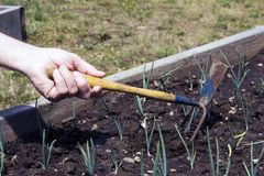 Jardin augmenté de bâti Photo libre de droits
