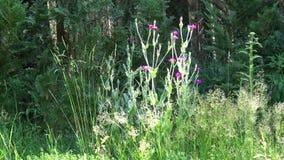 Jardin avant comportant la verdure différente comprenant les plantes vertes, et buissons contre la barrière banque de vidéos