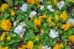 Jardin avec beaucoup de fleurs colorées images stock