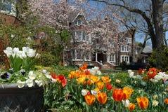 Jardin avec des fleurs de source photos libres de droits