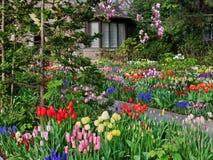 Jardin avec des fleurs de source images stock