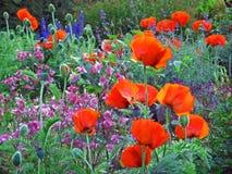 Jardin avec des pavots Photographie stock libre de droits