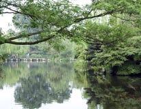 Jardin avec du charme avec la réflexion Photographie stock libre de droits